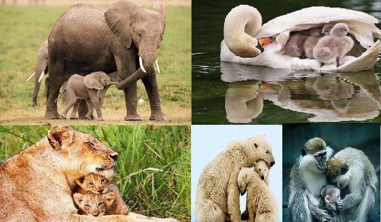 Познавательный микс «Мамы всякие нужны»